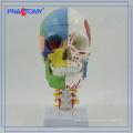PNT-0153 3 peças modelo de crânio colorido