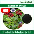 Natürliche Flavonoide Anthocyanine Holunder Sambucus Nigra Extrakt