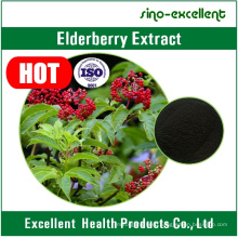 Natural Flavonoids Anthocyanins Elderberry Sambucus Nigra Extract
