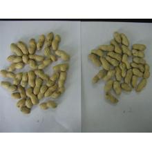 peanut in shells Shandong origin