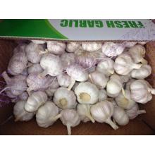 The Garlic Fresh New Crop 2019