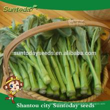 Suntoday Asian vegetable comprar semillas orgánicas en línea F1 home garden Organic choysum semillas de colza semillas para invernadero (39001)