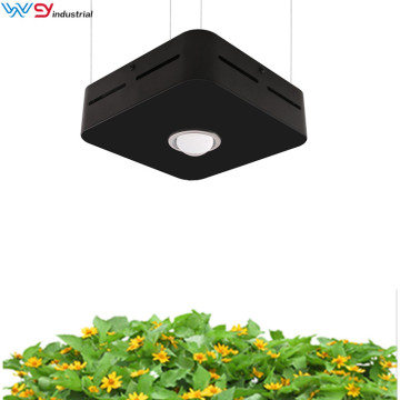 Cob led grow journal 200w grow lights