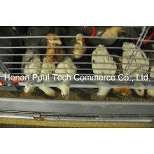 Little Chicken Cage Ausrüstung Brooder Chicken Cage