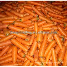 Preço de cenoura 2012