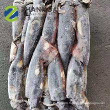 2020 fournisseur d'usine ronde de calmar équatorial congelé de mer