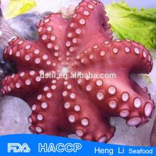Замороженный вареный осьминог из фарфора alibaba fro экспорт