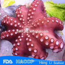 HL089 Seafood octopus for sale