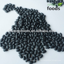 China High Quality Small Black Bean in new crop