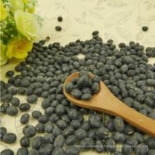 Prime qualidade secada grande feijão preto