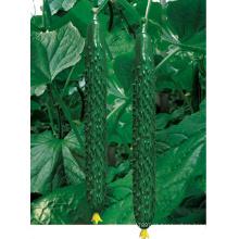 HCU12 Huoxi 35 cm de comprimento, sementes de pepino híbrido F1 chinês em sementes de hortaliças