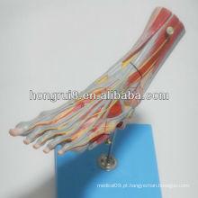 ISO Muscles of Foot Model com vasos e nervos principais, modelo de pé destacável