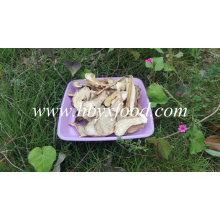 2016 Good Dried Boletus Edulis Price, Porcini Mushrooms for Sale