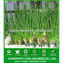 NSH01 Килу растительное лук-шалот семян продюсер название семян
