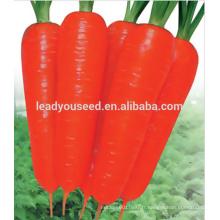 MCA021 Dahong bonne qualité résistant à la chaleur carotte graines prix