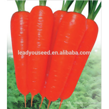 MCA021 Dahong good quality heat resistant carrot seeds price