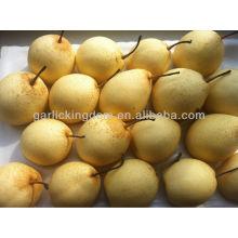China pear, Ya pear, pear fresh fruit