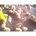 Plastic Mesh Factory Plastic Mesh for Chicken