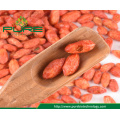 Freeze Dried Red Goji Berry