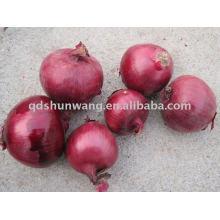 chinese fresh red onion