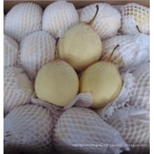 New Crop Fresh ISO Fengshui Pear