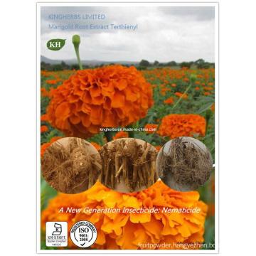 Marigold Root Extract Alpha-Terthienyl / Nematicide