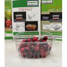 Plasticity Tomato Kiwi Packaging Tray