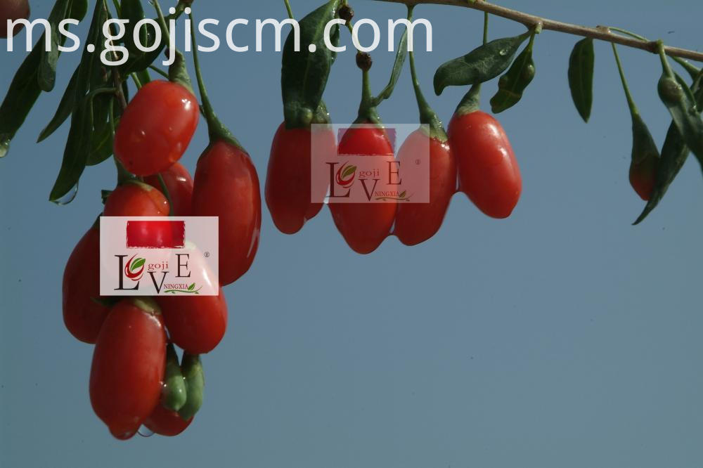 Multiple Advantages Goji