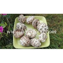 Légumes Shiitake aux fleurs blanches Légumes secs aux champignons