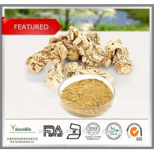 Extrait de racine de Dongica d'extrait de racine d'angélique de la Chine 100% naturel de haute qualité