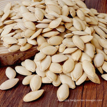 New arrival pumpkin seeds from China
