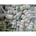 Knoblauch-Art und frischer Art-frischer Ernte-Knoblauch-Spezifikation