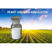 Mejor Pgr Gibberellin Acid 90% Tc Ga3
