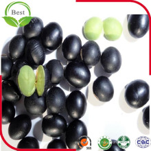 Black Beans for Sale/Black Bean with Green Kernel