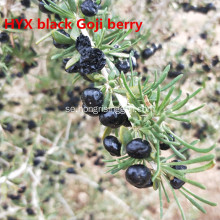 Wild Black Goji Berries Torkad Svart Wolfberry Goji
