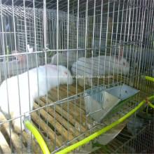 Cage et cage pliés galvanisés pour volaille / bétail