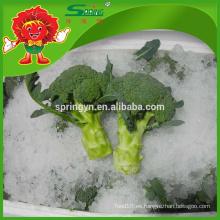 IQF limpieza decorativa brócoli fresco