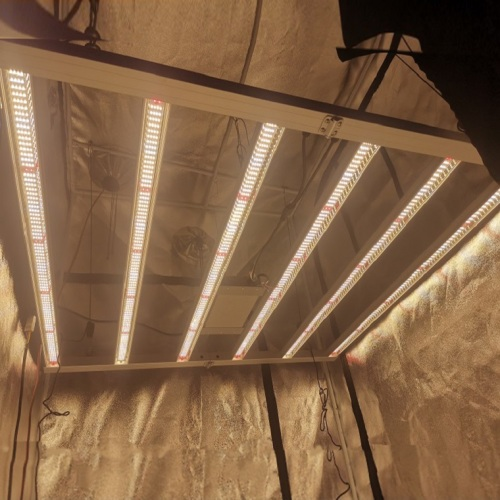 Potente 5x5ft LM301H / 301B Quantum Bar LED Grow Light