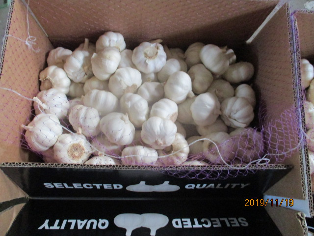 Pure Garlic New Crop 2019