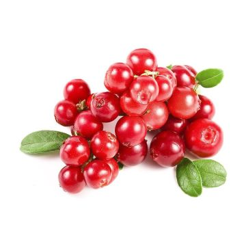 Cranberry Fruit Extract 10: 1