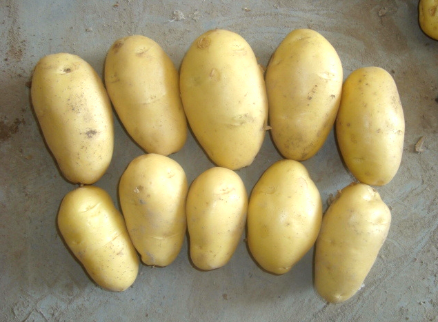 shandong potato