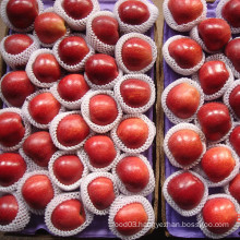 Chinese Red Delicious Apple 2014 Crop