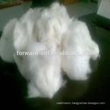 Pure White Wholesales Supplier Cashmere Fiber with Popular Quality