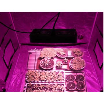 led 1000w grow light uk hidropónico