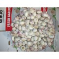 اشترِ Fresh Garlic 2020 Garlic