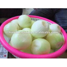 white fresh peeled onion