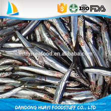 Good Quality Frozen Whole Round Anchovy