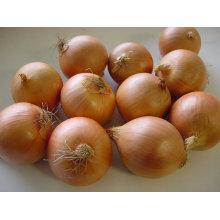 Export New Crop Frische Gute Qualität Gelbe Zwiebel