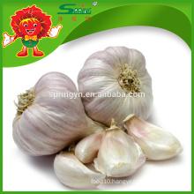 Chinese Top Grade White Pure Organic Fresh Garlic