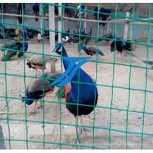 ПВХ покрытие сварной проволоки сетки/разведение Net
